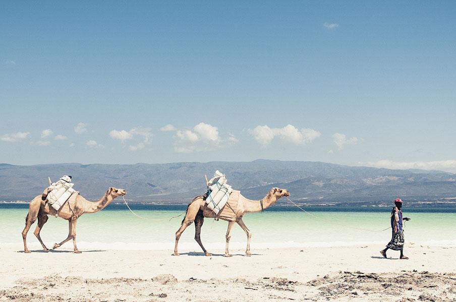 Sur les bords du Lac Assal, une caravane et ses nomades viennent chercher du sel.